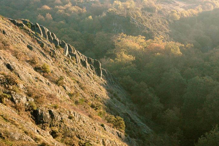stage géobiologie le Val sans retour, forêt de Brocéliande